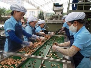 Viet Nam needs to restructure cashew production