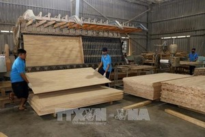 Forestry export value up almost 17% in 11 months