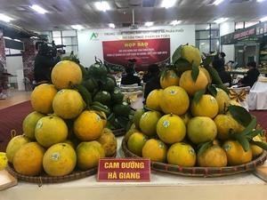 Ha Giang orange week to kick off next week