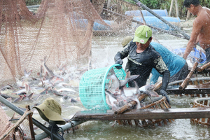 Viet Nam's tra fish exports exceed $2b for the first time