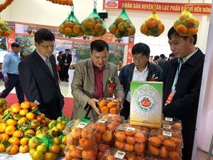 Hoa Binh tangerine variety granted collective trademark