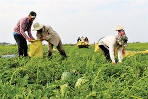 Bumper Tet for watermelon farmers