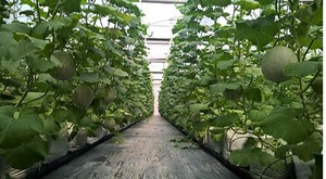 City to pay interest for hi-tech farms