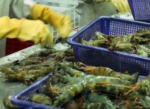Saudi Arabia to temporarily suspend Vietnamese fish imports
