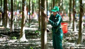 Viet Nam Rubber Group eyes profit rise