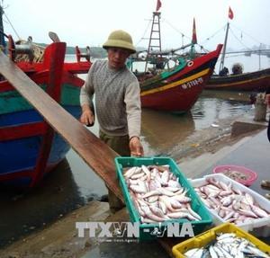 Fish catches, aquaculture harvests rise