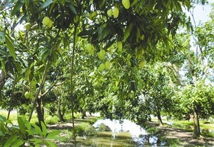 Seminar talks fruit, veg exports