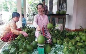 Ben Tre pomelo, coconut GI certified
