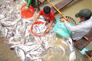 Fish exporters left lost at sea
