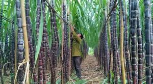 TTC Sugar to issue $19.75m worth of bonds