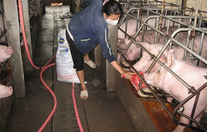 Pig farms disappearing