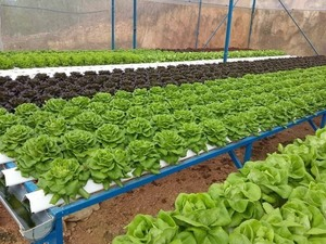 City to get high-quality farm products