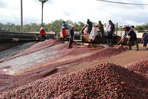 VN produce aims to reach French buyers