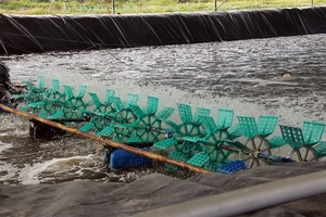 Farmers should reduce areas farming shrimp