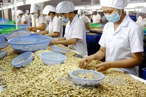 Conference on sustainable development of cashew sector