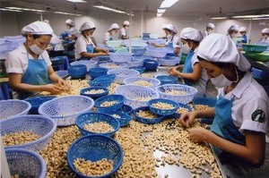 Cashew factories shut down due to lack of nuts