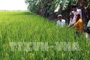 Kien Giang set to increase exports