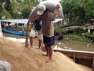 Viet Nam wins contract to export rice to South Korea