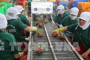 Tien Giang sees significant growth in export turnover