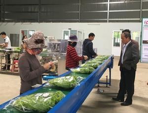 HCM City push to semi-process produce