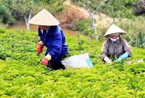 Provinces to host farm produce fairs