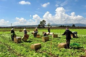 MM Mega Market honours Đà Lạt farmers
