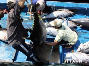 Tuna exports likely to hit $500m in 2018