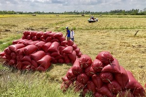 Can Tho eyes rice exports to China