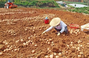 Sales of non-local farm produce banned at Da Lat market