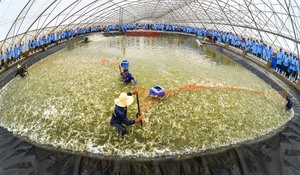 South Korean investor pours funds in Viet Uc Seafood