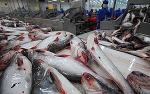 US issues lower duty on Vietnamese frozen fish fillets