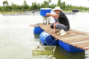 City farmers struggle to sell shrimp