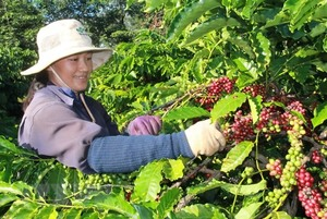 Viet Nam exports US$3.5 billion worth of coffee in 2018