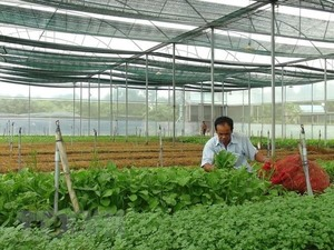 Viet Nam targets to attract 100,000 businesses in agriculture