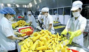 Asia, Europe important markets for VNfruit and veg