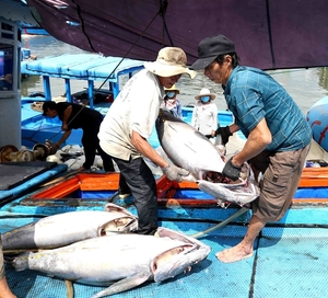 Viet Nam works hard to combat illegal fishing