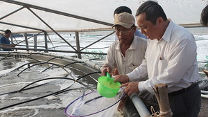 Shrimp breeders expand production, seek to join global supply chains