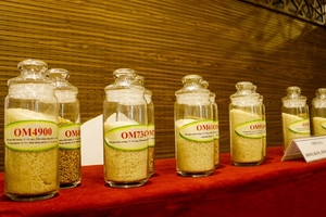 Hong Kong firms want to import rice from Can Tho
