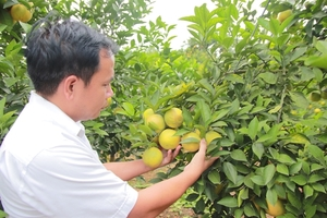Bac Giang agricultural products showcased in capital