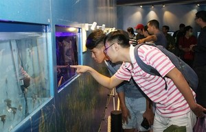 HCM City seeks to boost ornamental fish exports