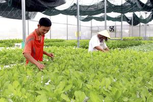 Digitisation boosts Ba Ria-Vung Tau agriculture