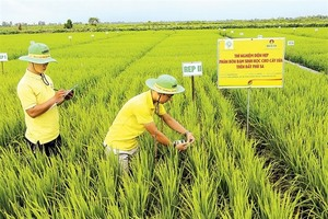 Mekong Delta farmers embrace new technology