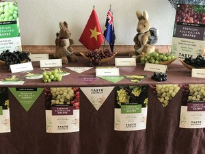 Australia to boost VN trade ties through table grapes