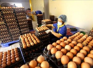 Vietnamese, Japanese firms seal egg deal