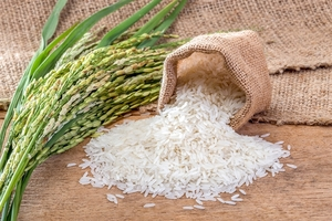 Sacombank assists rice production, trading with loans