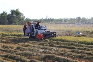 Viet Nam, China look to increase rice trade co-operation
