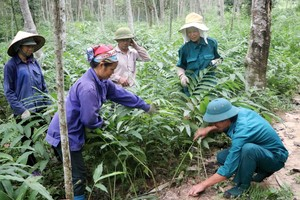 Viet Nam finalises agreement to trade legal timber with EU
