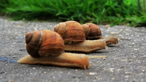 Equitisation moves at a snail's space in May