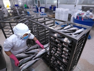 Tra fish industry faces challenges in production and export