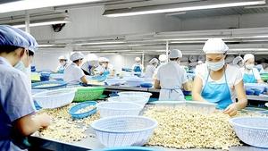 Dutch company to invest $250m in Binh Phuoc cashews
